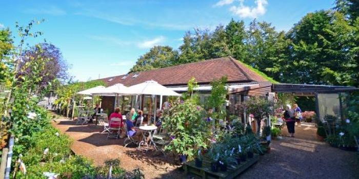 Afternoon Tea at Great Park Farm Nursery Tearoom 1