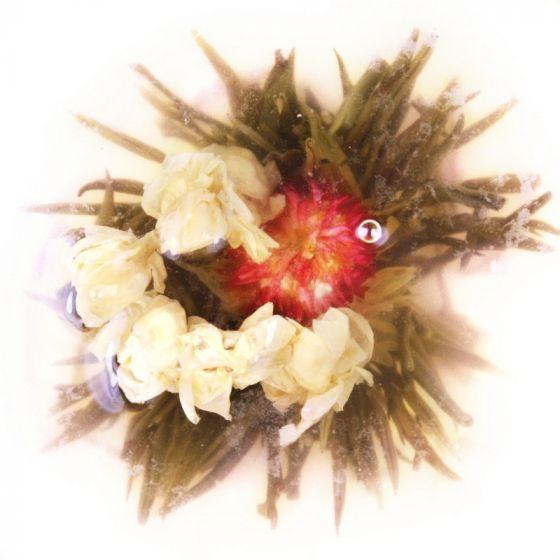 Yellow Flower Burst Tea Flower