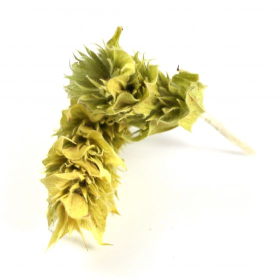 Sideritis Scardica Olympus Tea (whole)
