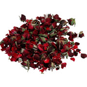 Rose buds red