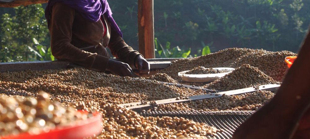Coffee Grading Process