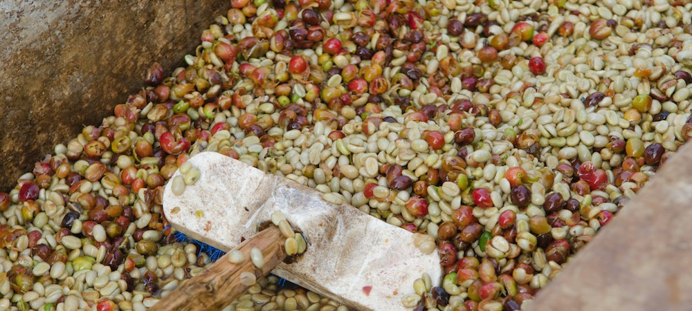 Coffee by Processing