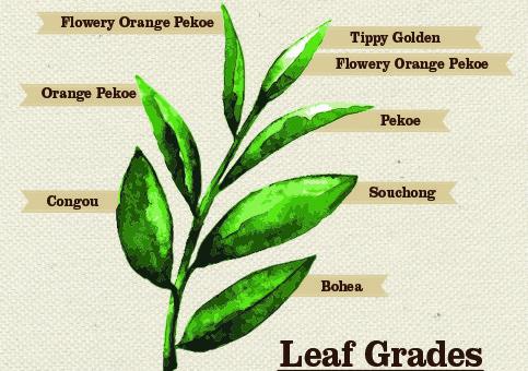 Tea Terminology Pic