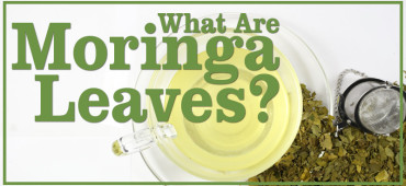 Moringa Leaves: The New Super Herbal Tea?