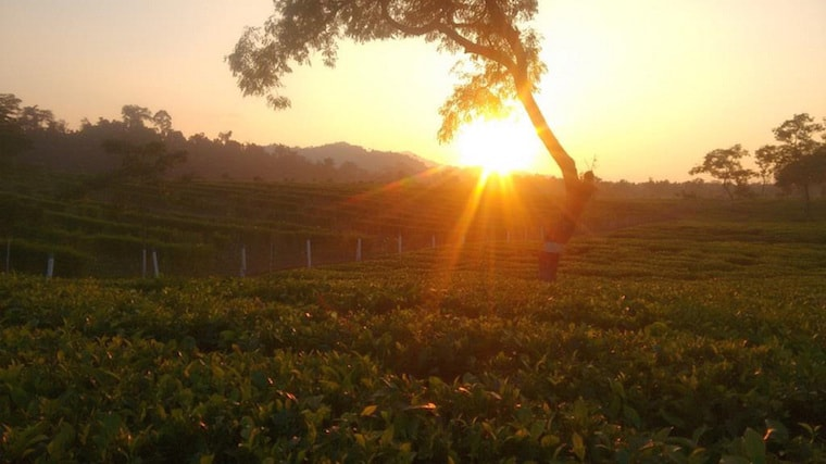 Dirok Tea Estate in Assam | Tea-and-Coffee com