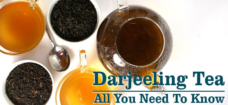 Darjeeling Tea - All You Need To Know