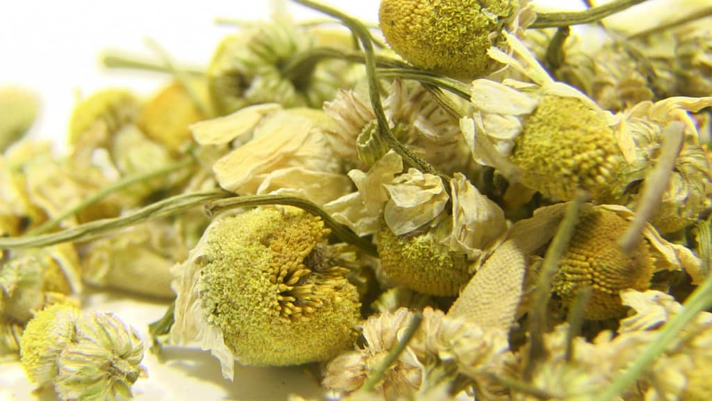 Dried Camomile Flowers
