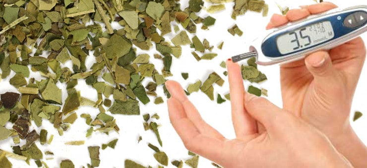 Yerba Mate can Aid Diabetes