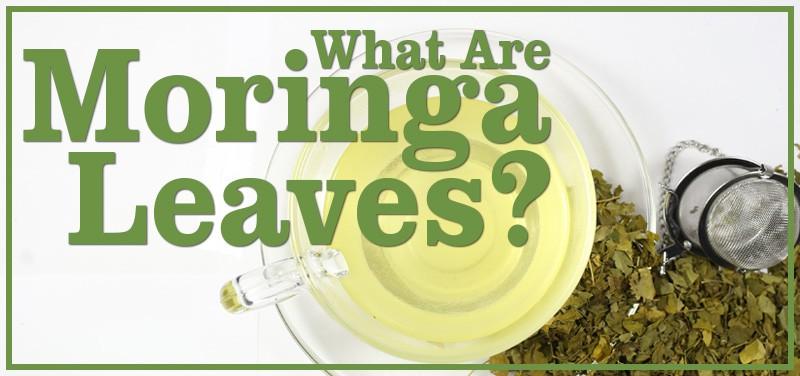 Moringa Leaves: The New Super Herbal Tea?