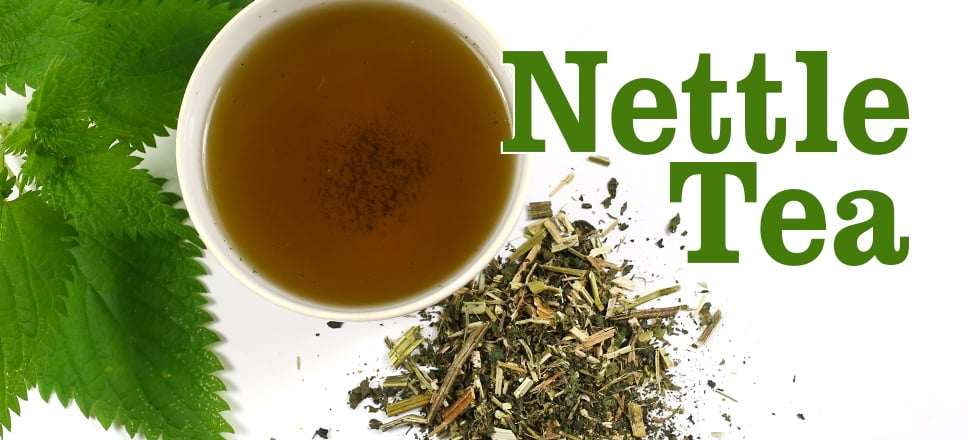 10 Incredible Nettle Tea Benefits