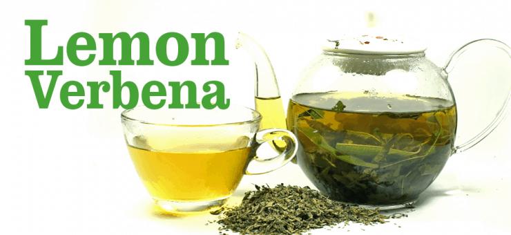 Lemon Verbena: Why You Should Drink this Herbal Tea