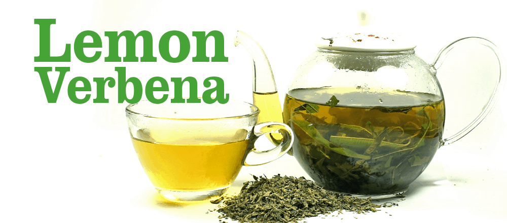 Lemon Verbena: Why You Should Drink this Herbal Tea