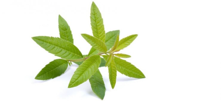 Lemon Verbena Joint Pain