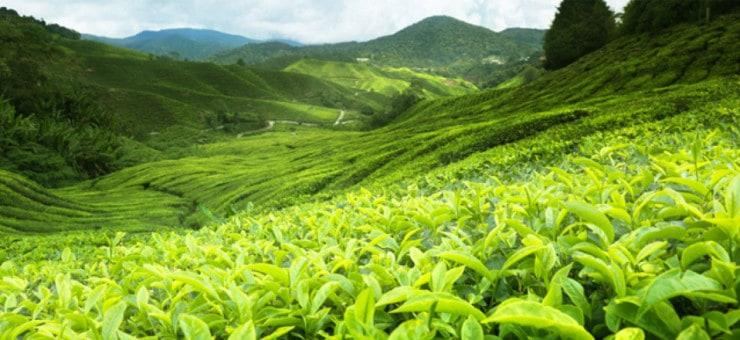 Ceylon Tea by Region