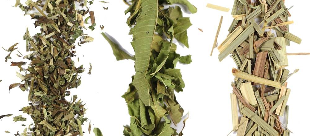 Lemon Balm - Lemon Verbena - Lemongrass