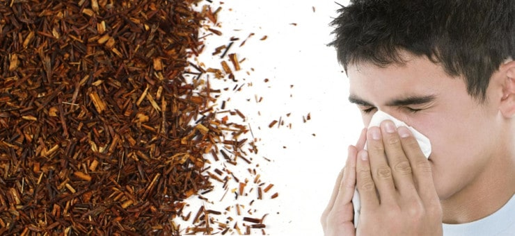 Rooibos Tea and Allergies