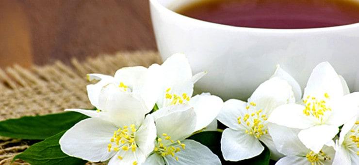History of Jasmine Tea