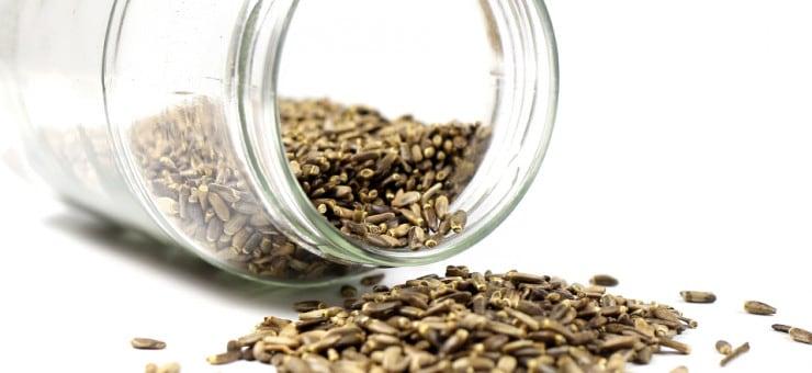Milk Thistle Seeds Benefits