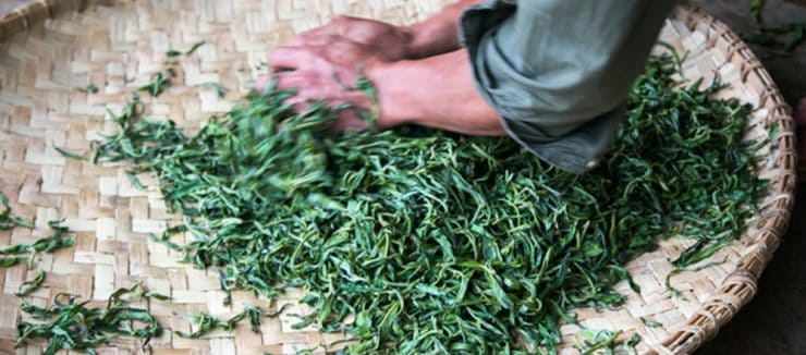 Rolling and Twisting Japanese Green Tea