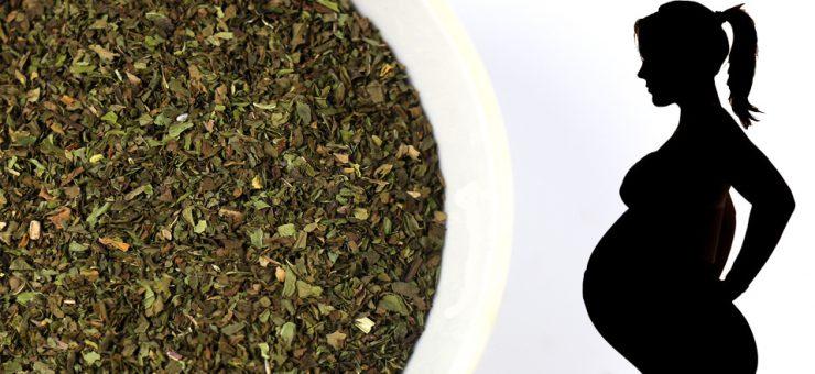 Spearmint Tea Pregnancy