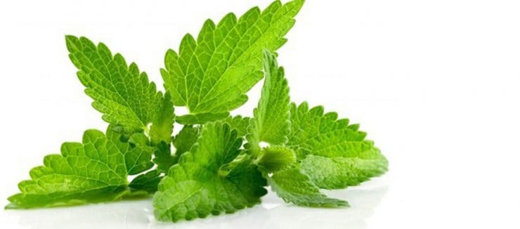History of Spearmint