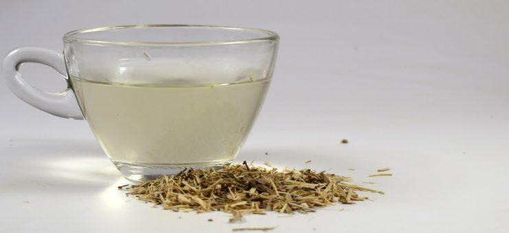 Where can I buy Ginseng Tea