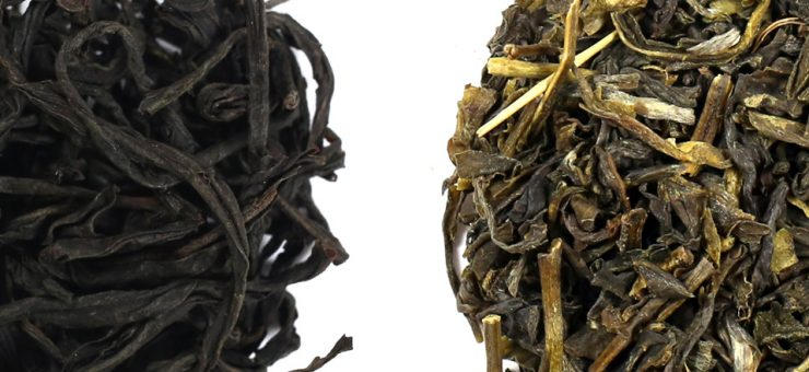 Green Tea vs Black Tea for Weight Loss