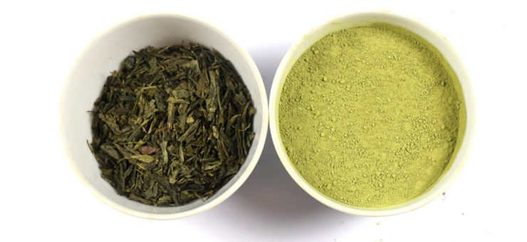 Matcha Tea vs Green Tea for Health Benefits
