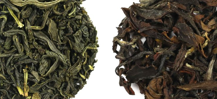 Is White Tea better than Green tea