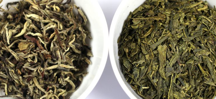 White Tea vs Green Tea for weight Loss