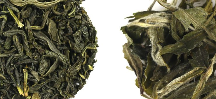 White Tea vs Green Tea for Health Benefits