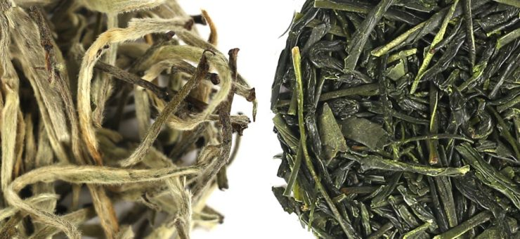 White Tea vs Green Tea for Taste