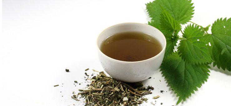 Nettle Tea Kidney Function