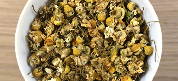 Types of Camomile Flower