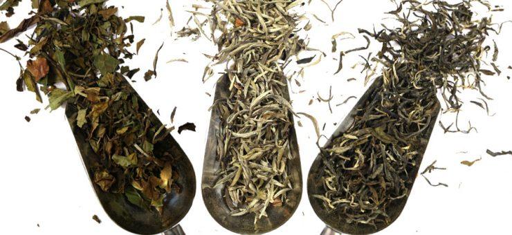 White Tea Types
