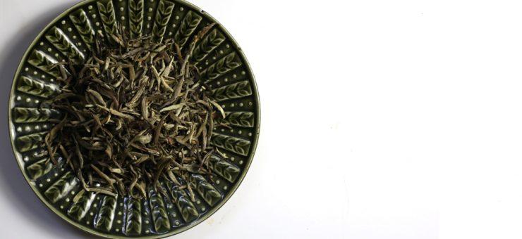 White Tea for Skin Care