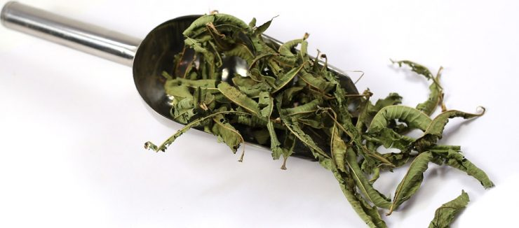 Lemon Verbena Tea Benefits