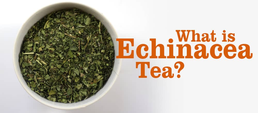 Echinacea Tea Benefits