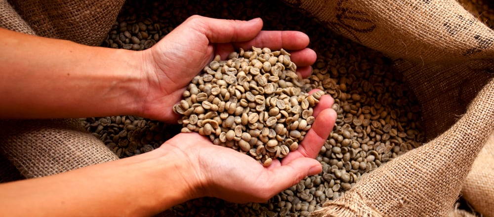 Guatemala Coffee Production