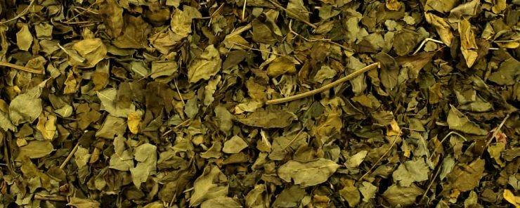 What is Moringa Tea