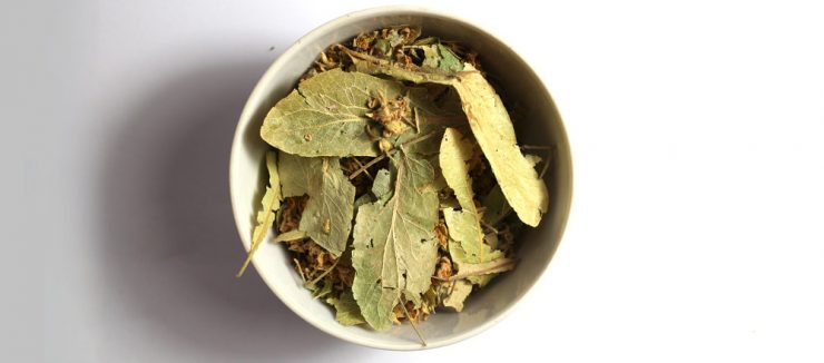 Is Linden Tea Good For Colds?