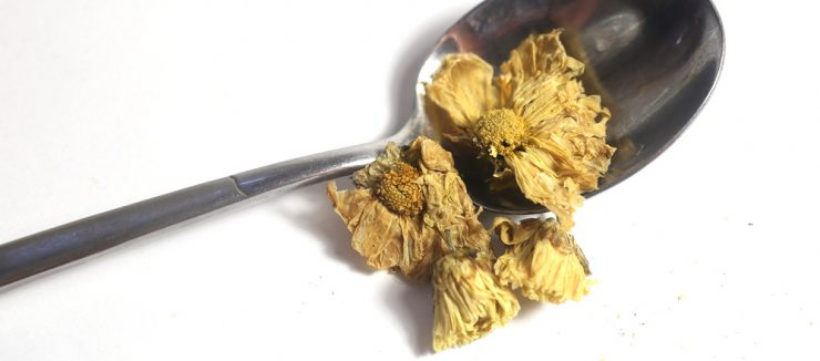 Legend of Chrysanthemum Tea