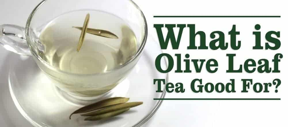 5 Good Reason to Drink Olive Leaf Tea