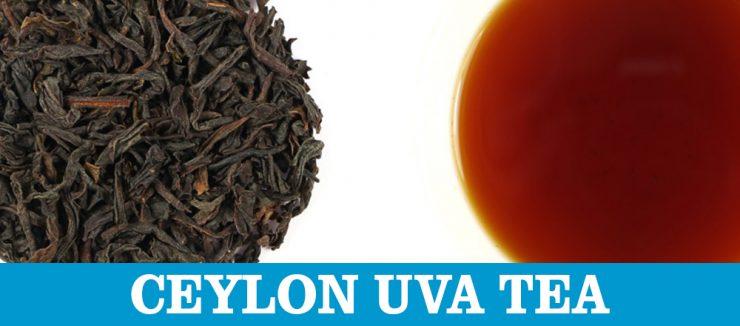 U Stands for Uva Tea