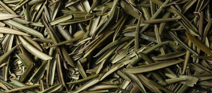 How to Make Olive Leaf Tea