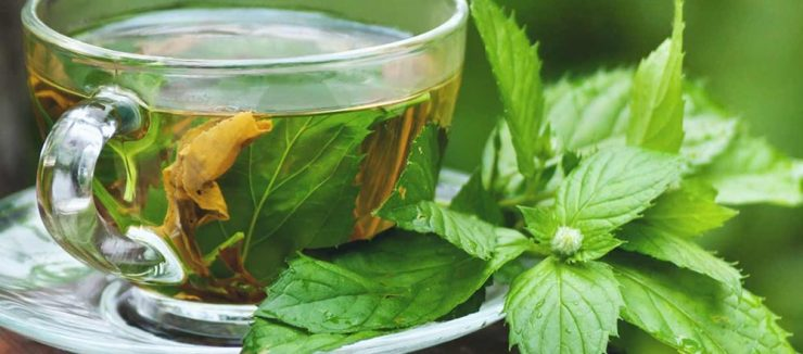 What is Hemp Tea?