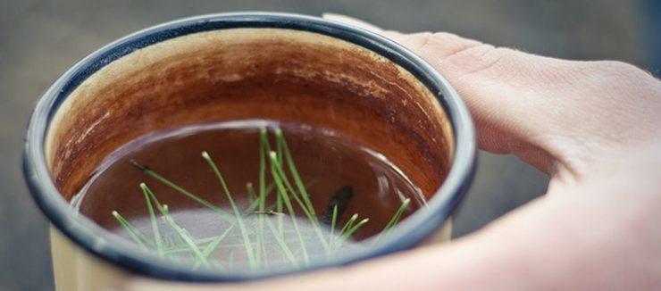 How to Make Pine Needle Tea