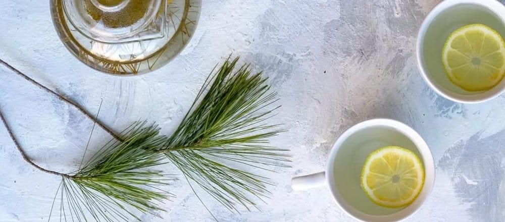 Benefits & Side Effects of Pine Needle Tea