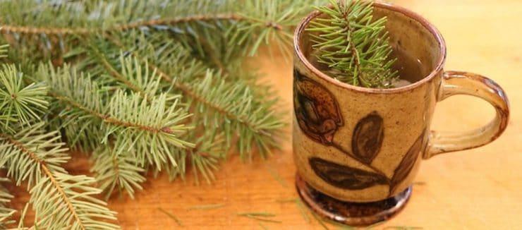 Pine Needle Tea and Pregnancy