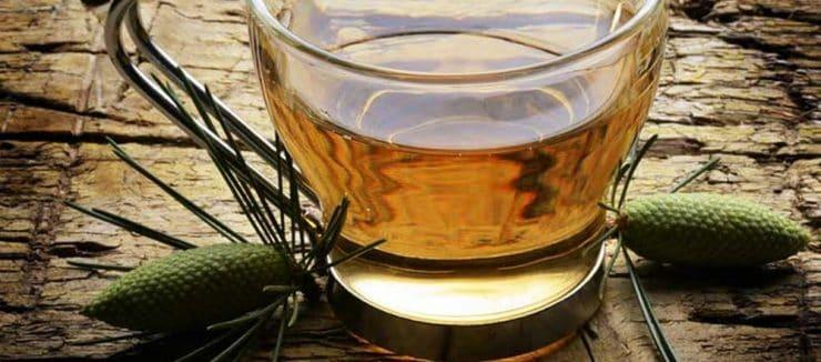 What is Pine Needle Tea?